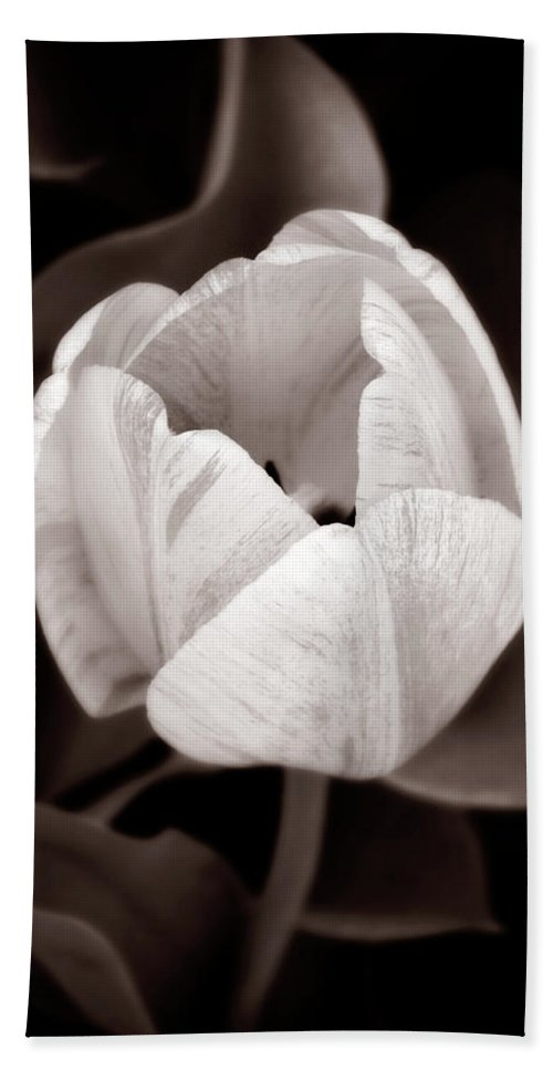 Black Beach Towel featuring the photograph Soft And Sepia Tulip by Marilyn Hunt
