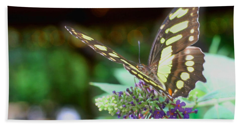 Butterfly Beach Towel featuring the photograph Soft Butterfly by Smilin Eyes Treasures