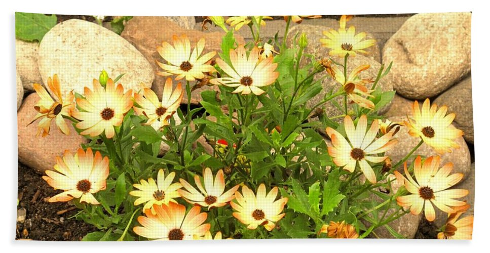 Flowers Beach Towel featuring the photograph Soft by Ian MacDonald