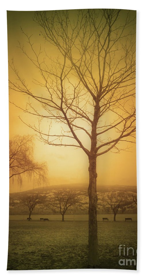 Trees Beach Towel featuring the photograph Soft Light In Summerland by Tara Turner