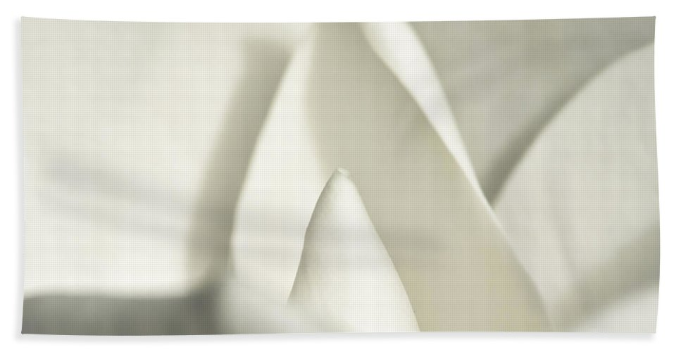 Magnolia Beach Towel featuring the photograph Soft Magnolia by Christopher Holmes
