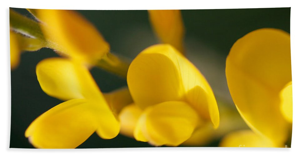 Sweet Broom Photographs Beach Towel featuring the photograph Soft Sweet Broom by Brooke Roby