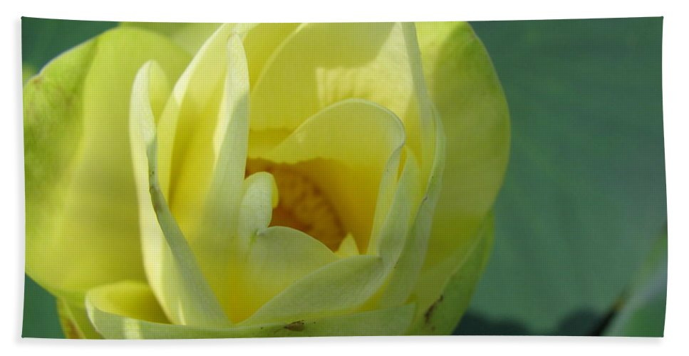 Lotus Beach Towel featuring the photograph Softly by Amanda Barcon