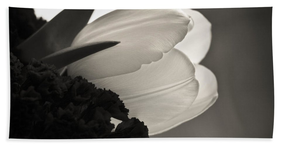 Floral Beach Sheet featuring the photograph Lit Tulip by Marilyn Hunt