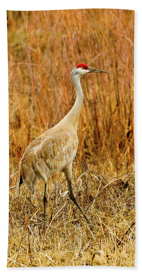 Sandhill Crane Beach Towel featuring the photograph Solitude by Greg Norrell