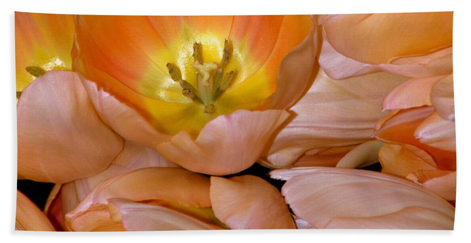 Tulips Beach Towel featuring the photograph Somewhat Peachy by Trish Tritz
