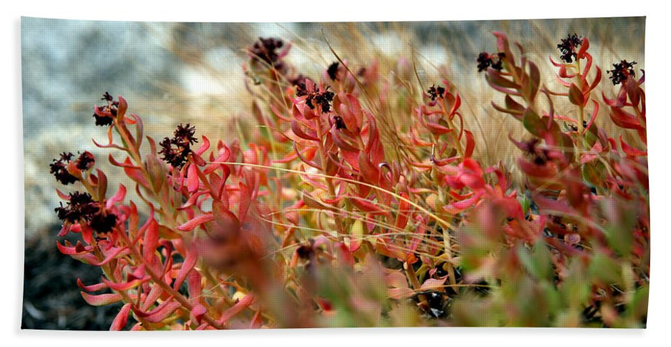 Beach Towel featuring the photograph South Lake Beauties by Chris Brannen