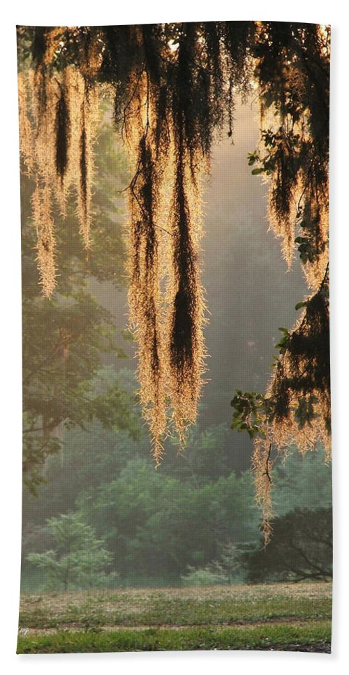 Spanish Moss Beach Towel featuring the photograph Spanish Moss In The Morning by Robert Meanor