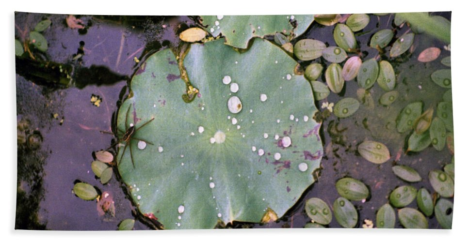 Lillypad Beach Towel featuring the photograph Spider And Lillypad by Richard Rizzo