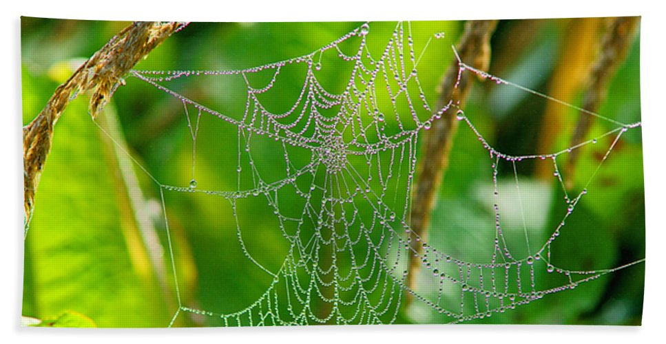 Spiders Beach Towel featuring the photograph Spider Web Artwork by Randy Harris