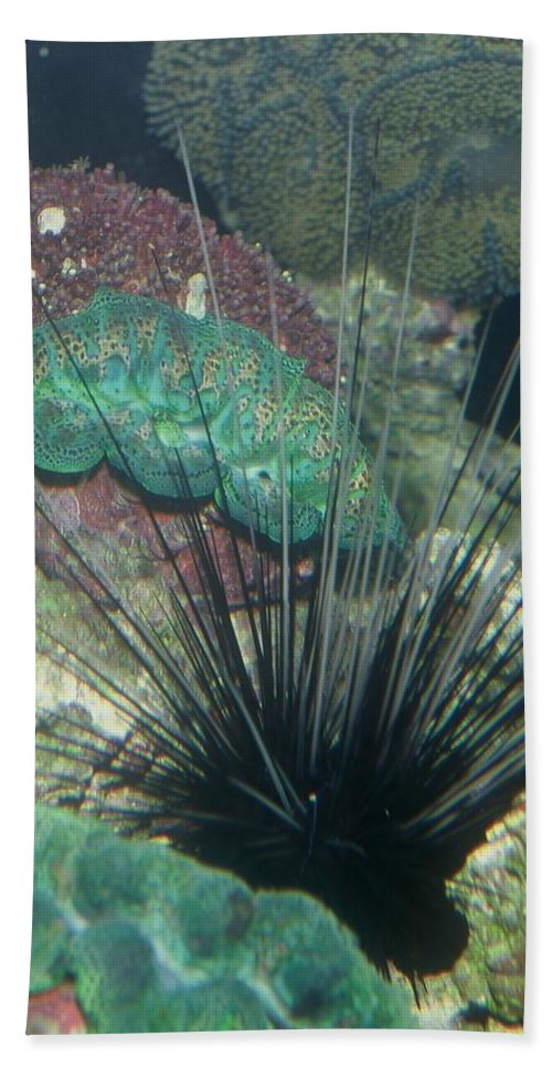 Nature Beach Towel featuring the photograph Spiny by Kimberly Mohlenhoff