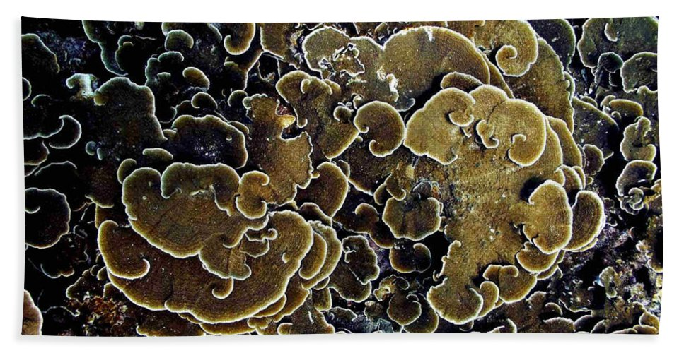 Corals Beach Towel featuring the photograph Spirals In Corals by Dragica Micki Fortuna