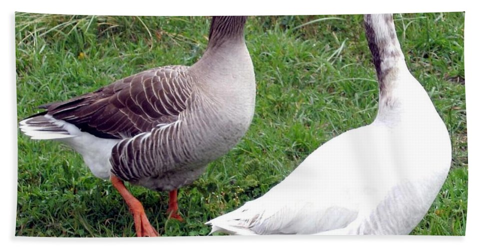 Geese Beach Towel featuring the photograph Spirited Geese by Will Borden