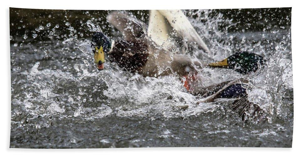 Horses Graze Beach Towel featuring the photograph Splashing Mallards by Cliff Norton