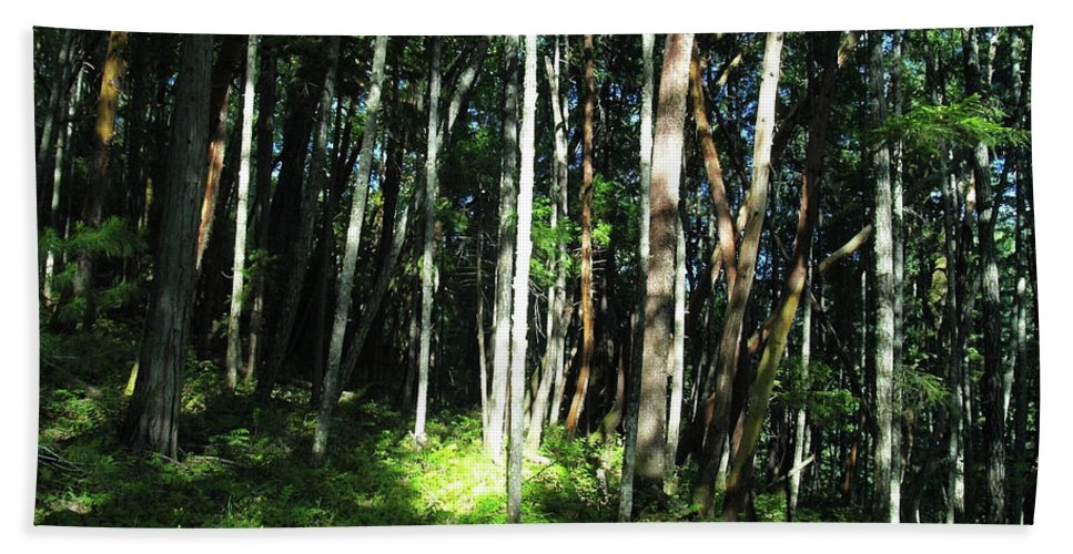 Trees Beach Towel featuring the photograph Spot On by Teri Schuster