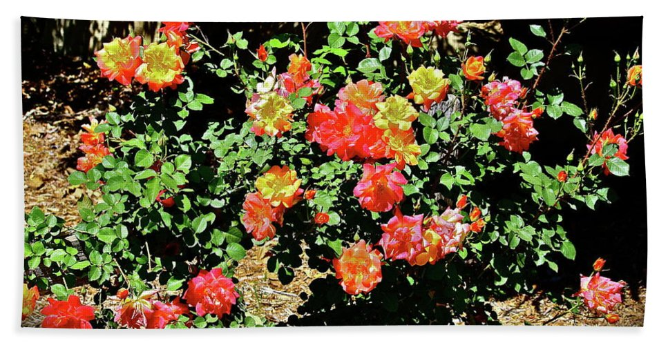 Flowers Beach Towel featuring the photograph Spreading Cheer by Diana Hatcher