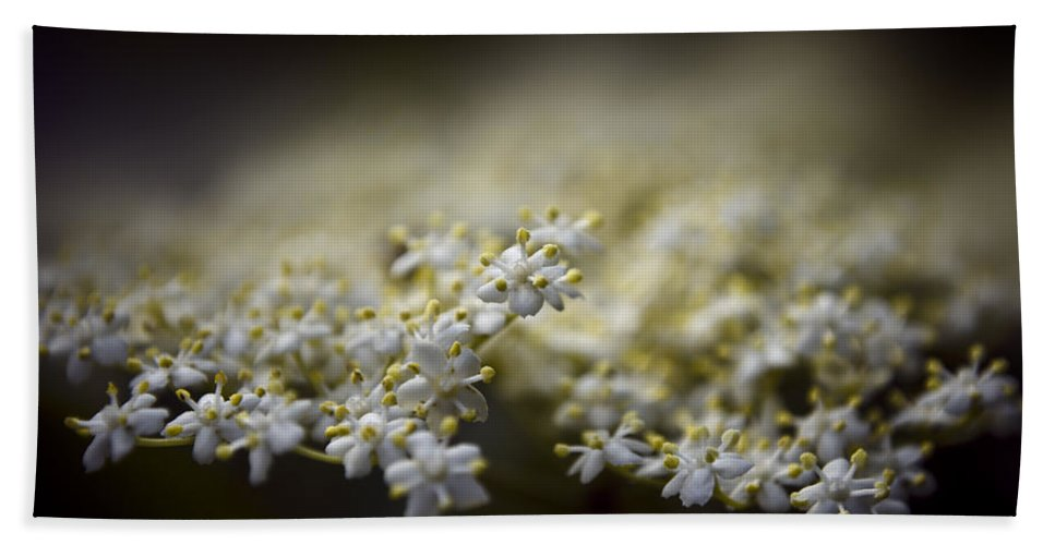 Beautiful Beach Towel featuring the photograph Spring Bloom by Svetlana Sewell