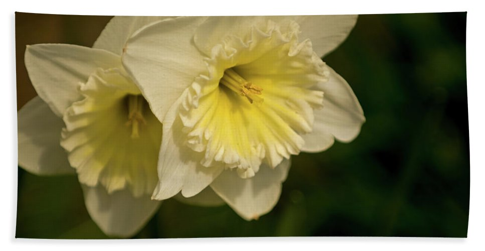 Daffodils Beach Towel featuring the photograph Spring Couple by Paul Mangold
