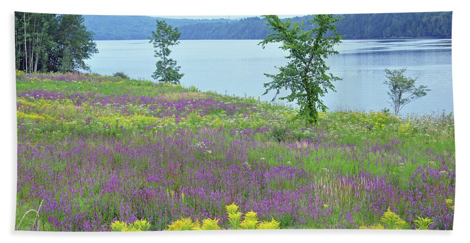 Nature Beach Towel featuring the photograph Spring Fever by Glenn Gordon