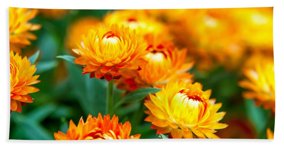 Spring Flowers Beach Towel featuring the photograph Spring Flowers In The Afternoon by Az Jackson