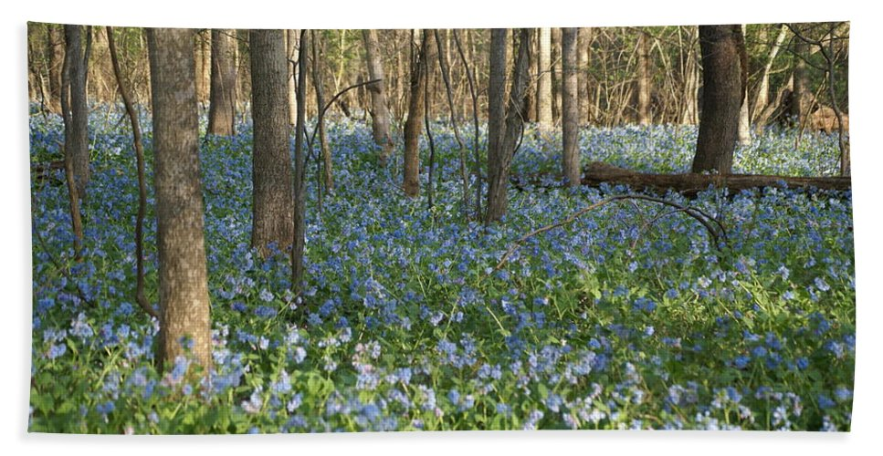 Bluebells Beach Towel featuring the photograph Spring by Heidi Poulin