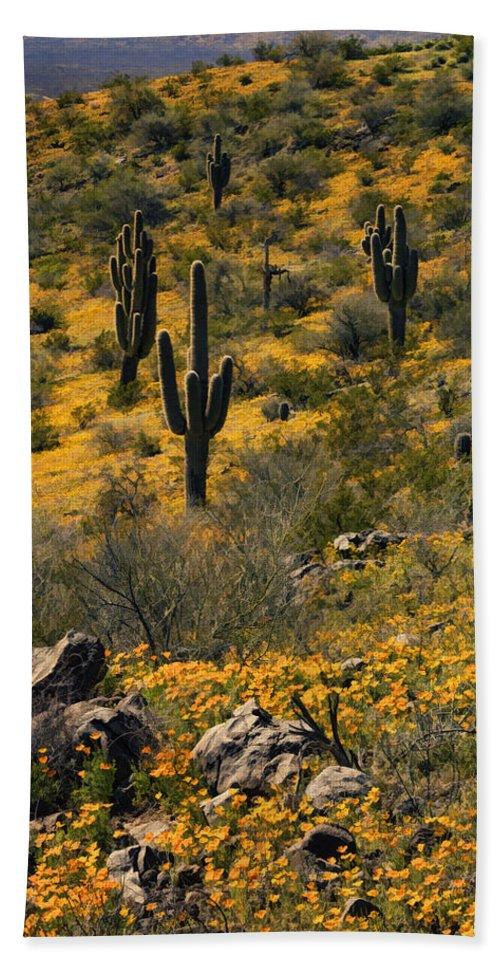 Wildflowers Beach Towel featuring the photograph Spring In The Sonoran Desert by Saija Lehtonen