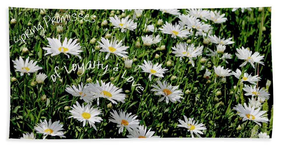 Daisies Beach Towel featuring the photograph Spring Loyal Love Daisies by Dale E Jackson