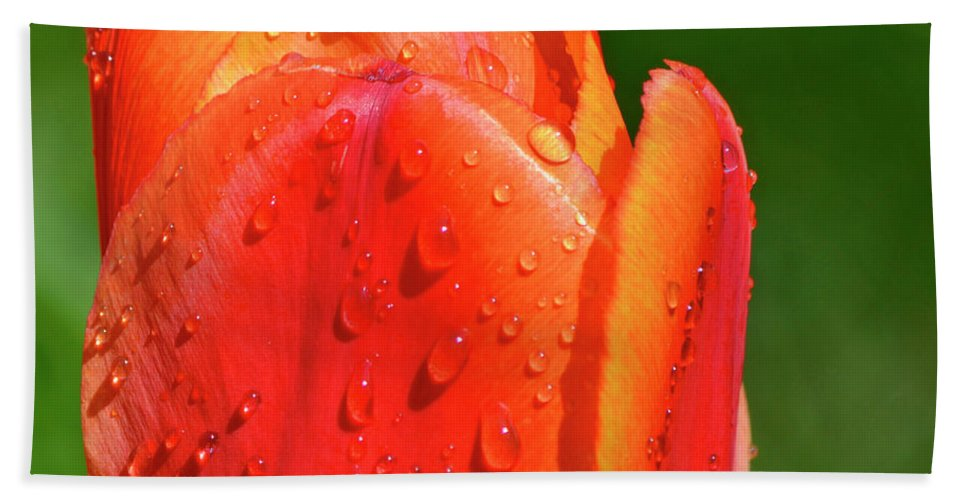 Tulip Beach Towel featuring the photograph Spring Tears by Traci Cottingham