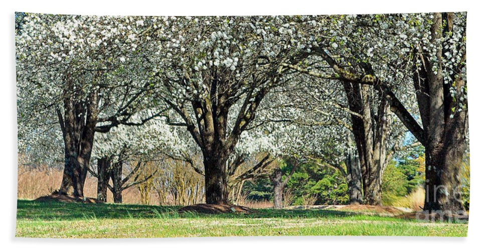 Trees Beach Towel featuring the photograph Spring's Canopy by Lydia Holly