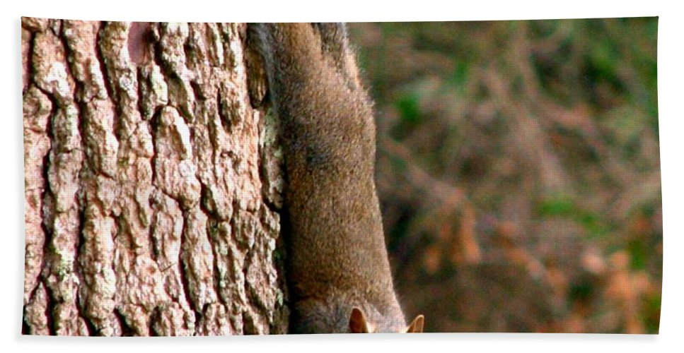 Squirrel Beach Towel featuring the photograph Squirrel 6 by J M Farris Photography