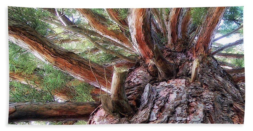 Tree Beach Towel featuring the photograph Squirrel Haven by Donna Blackhall