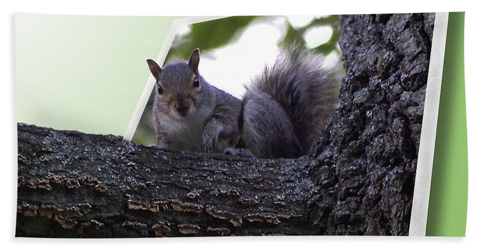 2d Beach Towel featuring the photograph Squirrel On A Limb by Brian Wallace