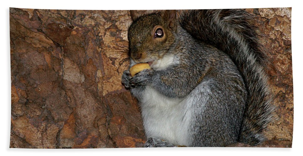 Squirrell Beach Towel featuring the photograph Squirrell by Pedro Cardona Llambias
