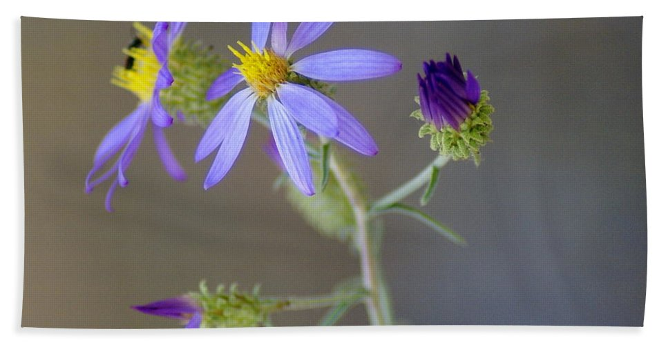 Flowers Beach Towel featuring the photograph Stages Of Development by Ben Upham III