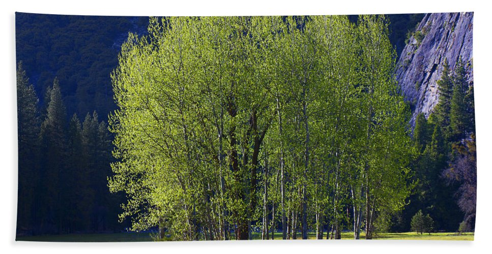 Trees Beach Towel featuring the photograph Stand Of Trees Yosemite Valley by Garry Gay