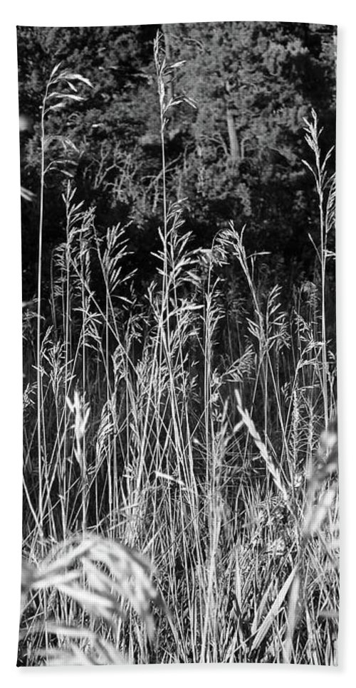 Tall Grass Beach Towel featuring the photograph Stand Out In The Crowd by Viki Velazquez