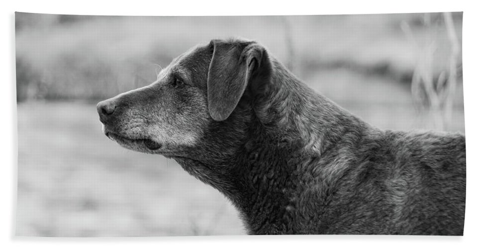 Dog Beach Towel featuring the photograph Standing Watch by Donna Blackhall