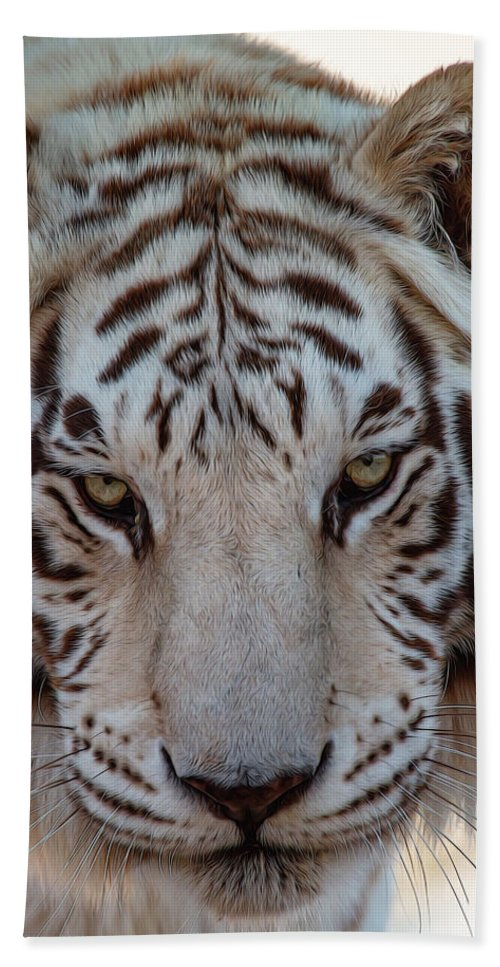 Animal Beach Towel featuring the photograph Stare Down by Teresa Wilson