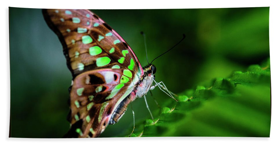 Plant Beach Towel featuring the photograph Step By Step by Joann Long