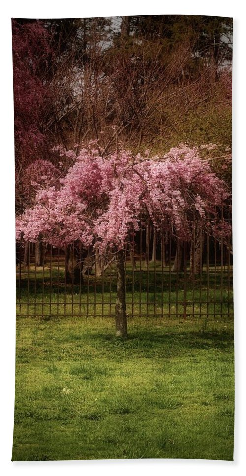 Cherry Blossom Tree Beach Towel featuring the photograph Still - Ocean County Park by Angie Tirado