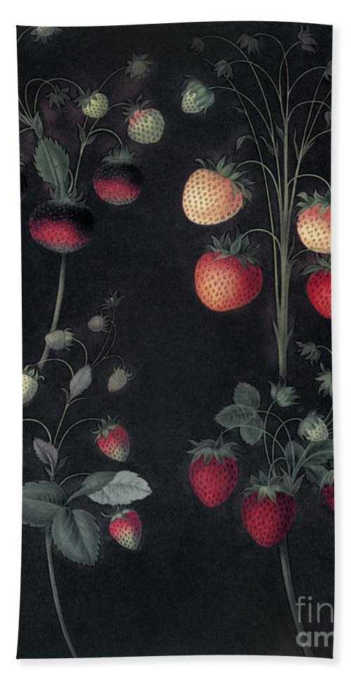 1812 Beach Towel featuring the photograph Strawberries by Granger