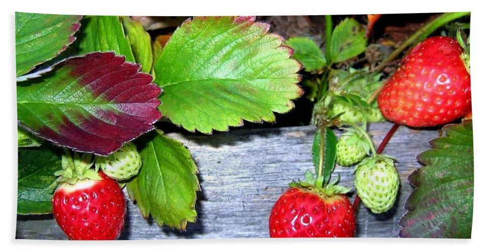 Strawberries Beach Towel featuring the photograph Strawberries by Will Borden