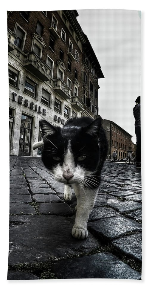 Cat Beach Towel featuring the photograph Street Cat by Nicklas Gustafsson