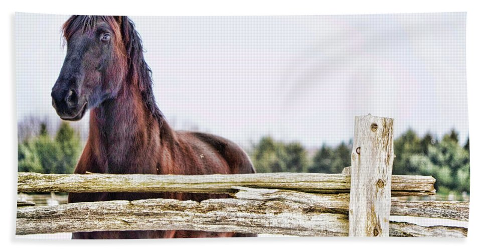 Horse Beach Towel featuring the photograph Strength by Traci Cottingham