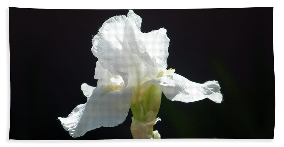 Iris Beach Towel featuring the photograph Striking White Iris by Alynne Landers