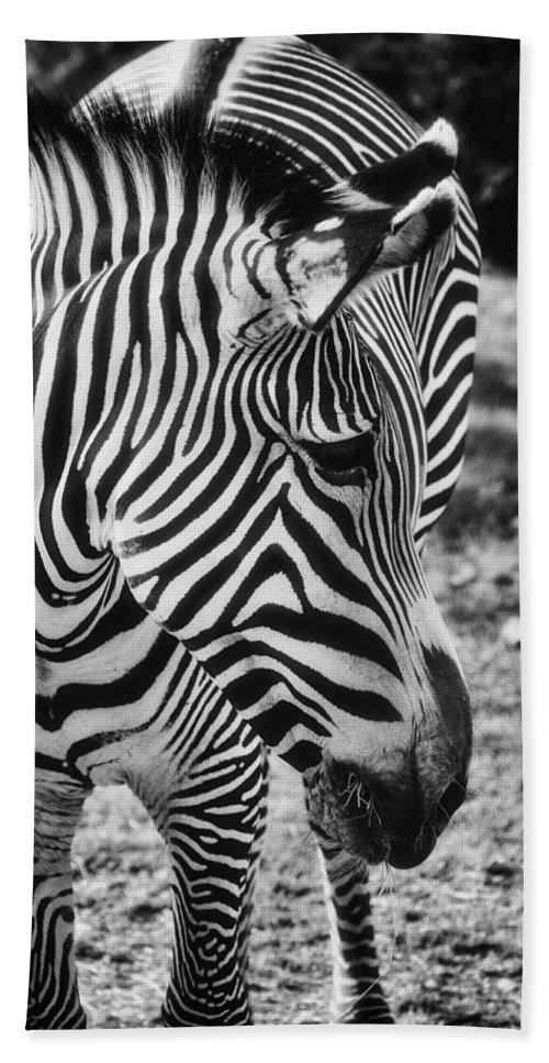 Zebra Beach Towel featuring the photograph Stripes by Saija Lehtonen