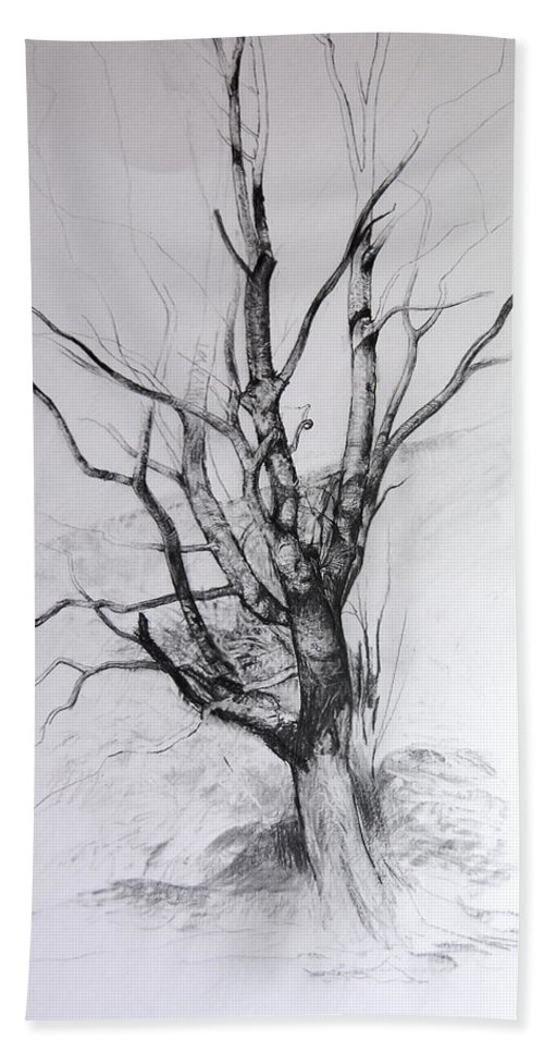 Landscape Beach Towel featuring the drawing Study Of A Tree by Harry Robertson