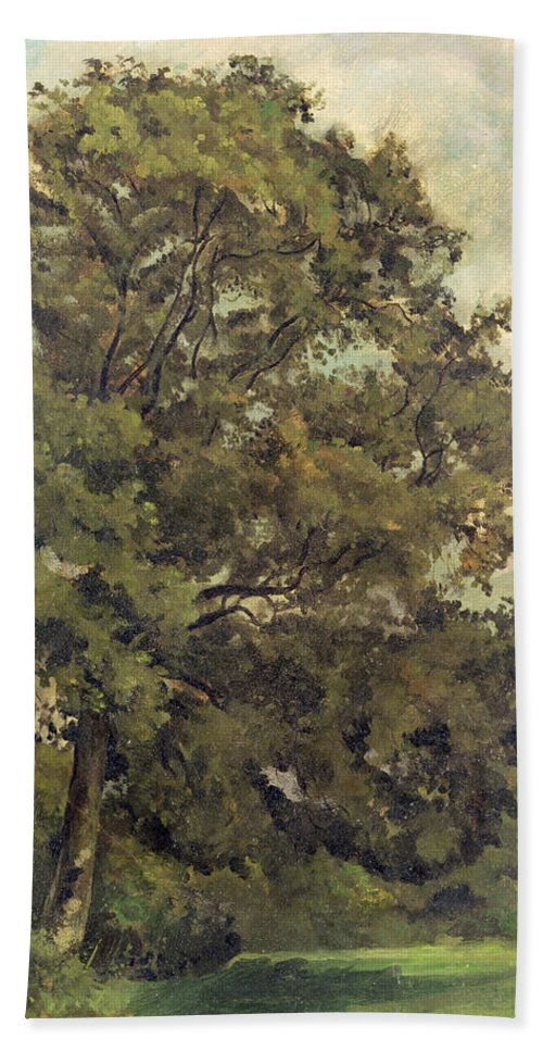 Xyc220952 Beach Towel featuring the photograph Study Of An Ash Tree by Lionel Constable