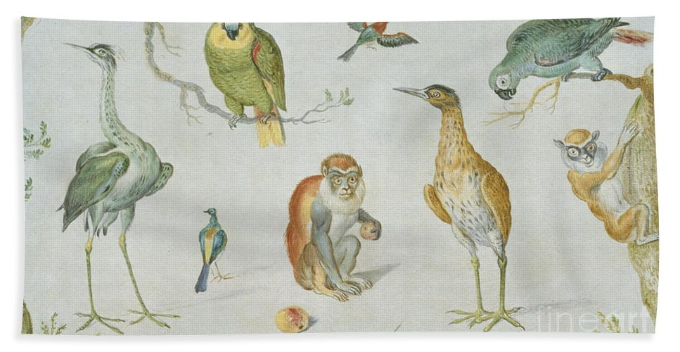 Beach Towel featuring the painting Study Of Birds And Monkeys by Circle Of Jan Van Kessel