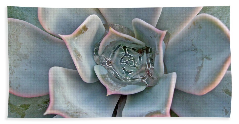 Succulent Beach Towel featuring the photograph Succulent In Pastels by Mother Nature